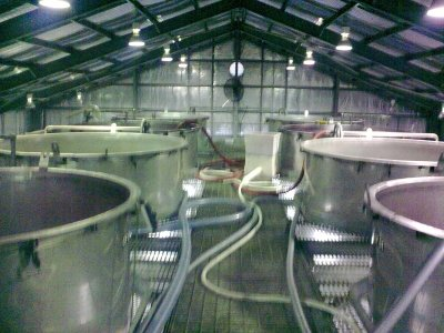 The Fermentters during vintage